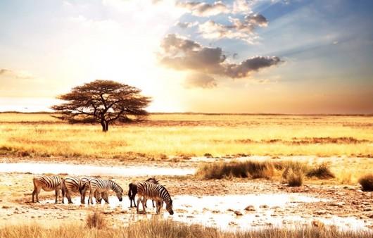 Фотообои Африканские животные
