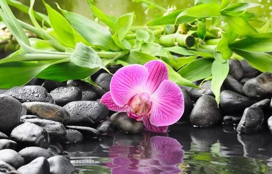 Цветок в пруду