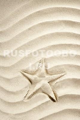 Звездочка на песке