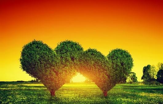 Фотообои Деревья в виде сердец