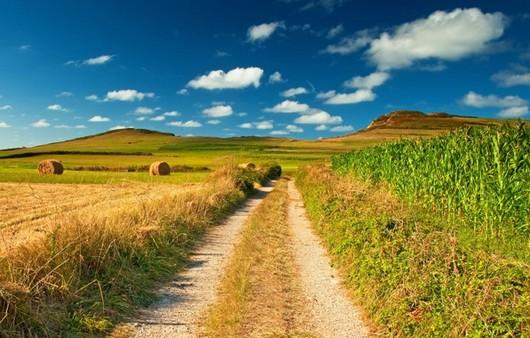 Фотообои Пейзаж с дорогой и полем