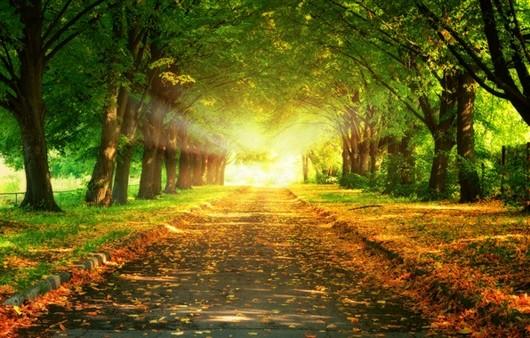 Фотообои Аллея освещенная солнцем
