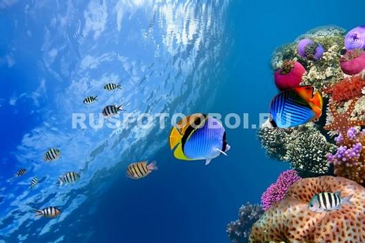 Рыбки под водой