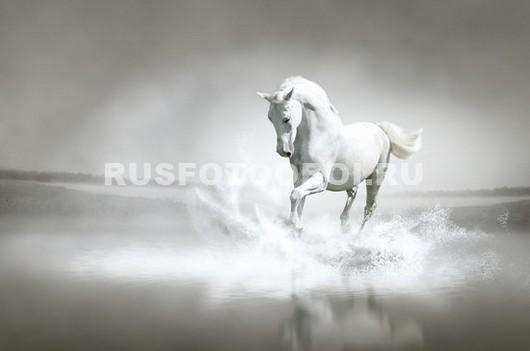 Белая лошадь скачет по воде