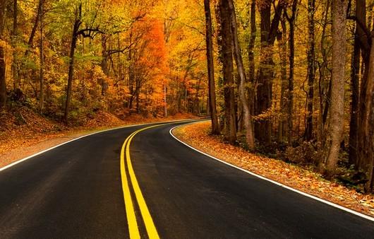Дорога и осенний лес
