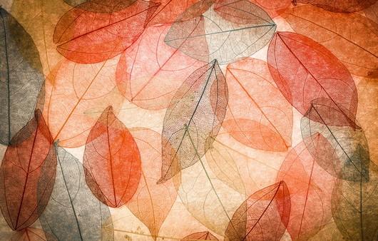 Текстуры осенних листьев