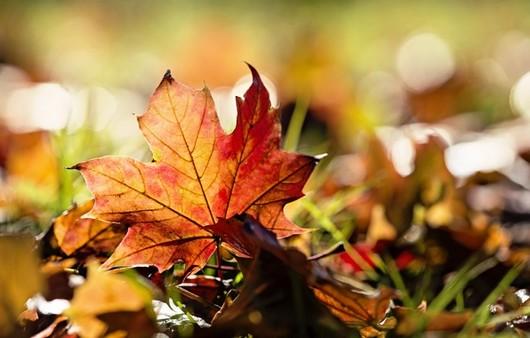 Осенний лист в макросъемке