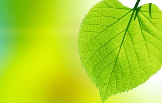 Фотообои Зеленый лист в макросъемке