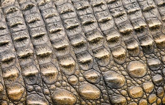 Фотообои текстура крокодиловой кожи