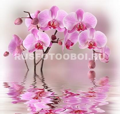Орхидея с отражением на воде