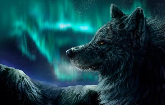 Волк и северное сияние