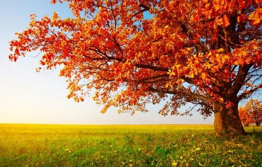 Фотообои Осеннее дерево
