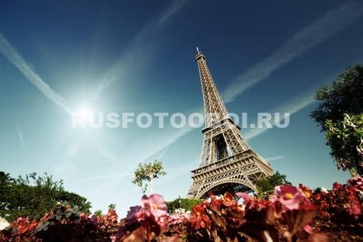Цветы на фоне Эйфелевой башни