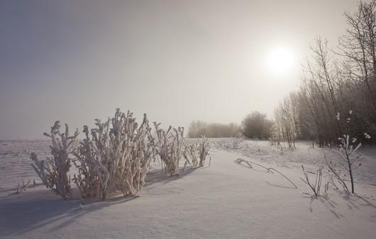 Фотообои Снежная степь