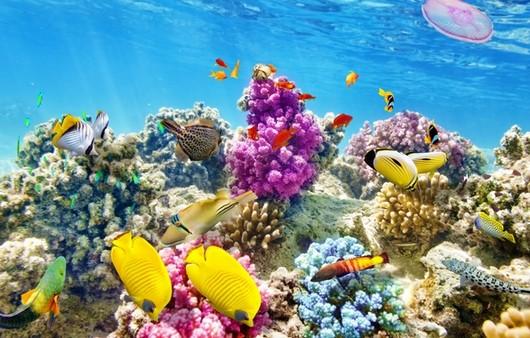 Морской риф