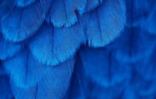 Текстура с синими перьями