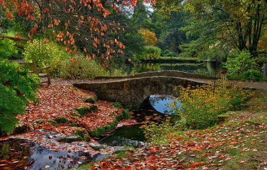Фотообои Английский пруд