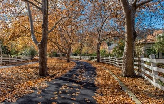 Аллея усыпанная осенними листьями