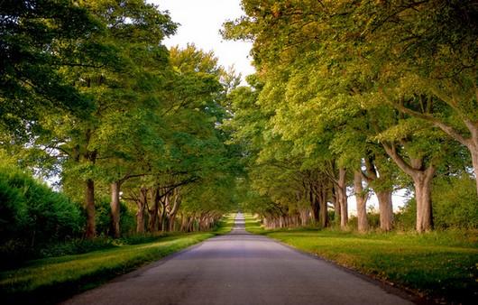 Фотообои Аллея с деревьями