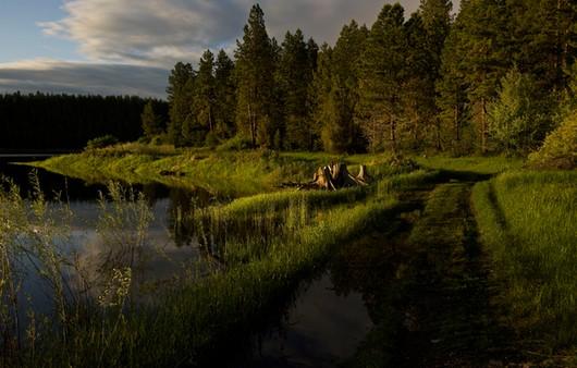 Фотообои Набережная и лес