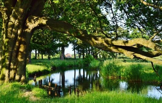 Свисающее дерево на рекой