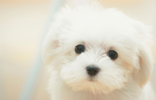 Грустный взгляд щенка