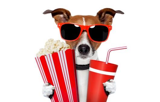 Собака в очках с поп-корном
