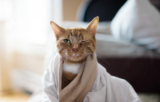 Забавный кот в платке
