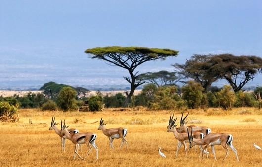 Антилопы в сафари