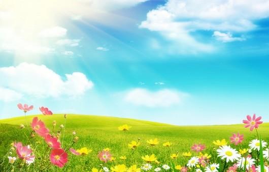 Лужайка с цветами