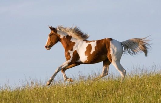 Скачущий конь в степи