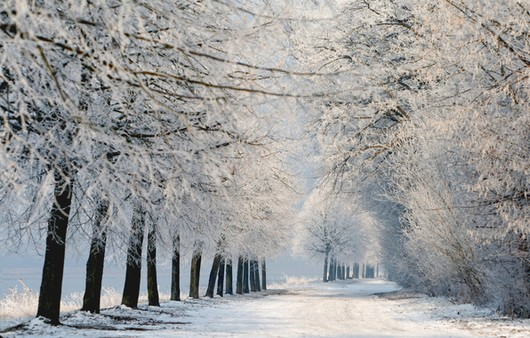 Фотообои Зимний пейзаж с аллеей