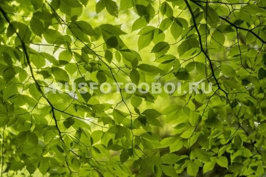 Зеленые ветки