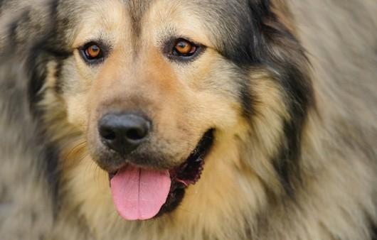Уставший взгляд собаки