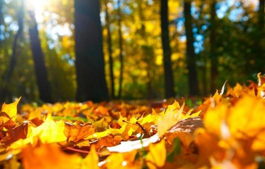 Фотообои Осенний лес и дорога
