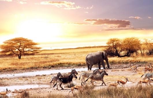 Пейзаж саванна в Африке