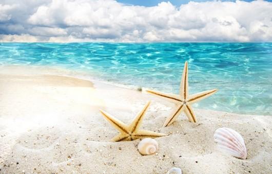 Фотообои Морские звезды и ракушки
