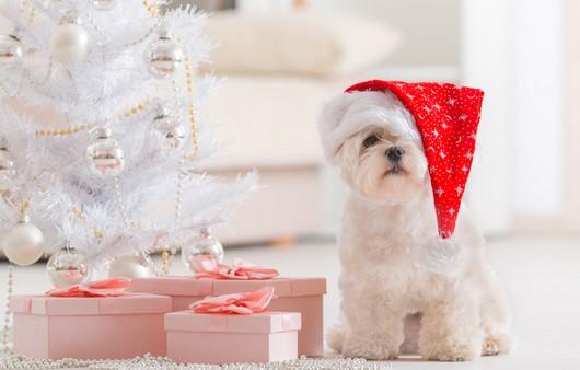 Собачка в новогодней шляпке