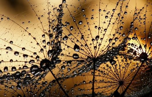 Капли утренней росы в макросъемке