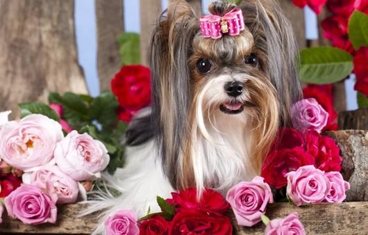 Милая собачка с цветами