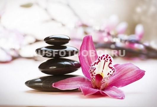 Один цветок розовой орхидеи