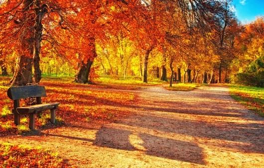 Фотообои Осенний парк