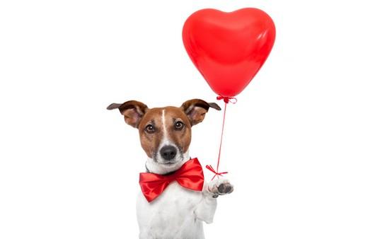 Собачка с воздушным шариком