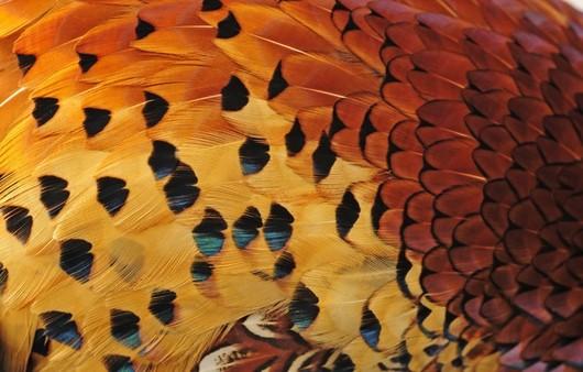 Фотообои Текстуры с птицами