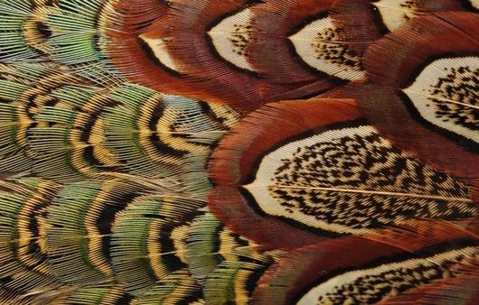 Текстуры с перьями