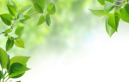 Ветки с зелеными листьями