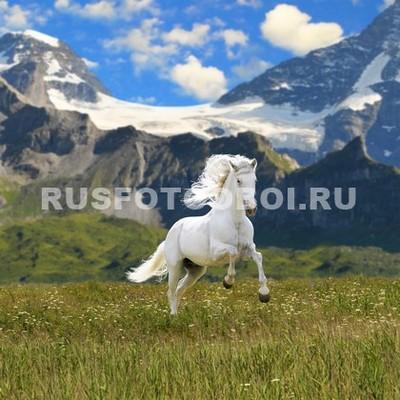 Белая лошадь в горах