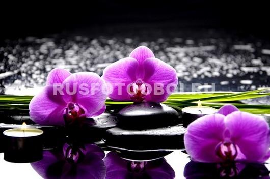 Розовая орхидея с галькой и отражением