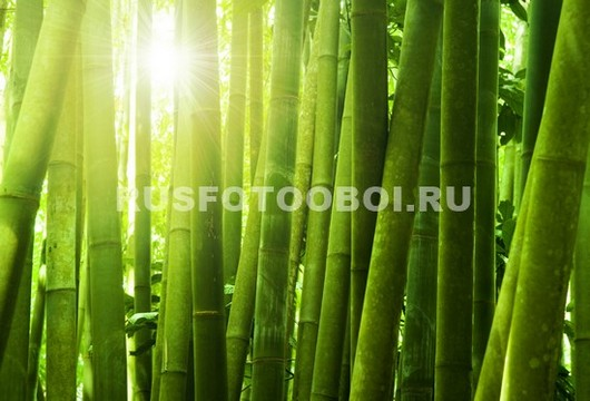 Солце через бамбук