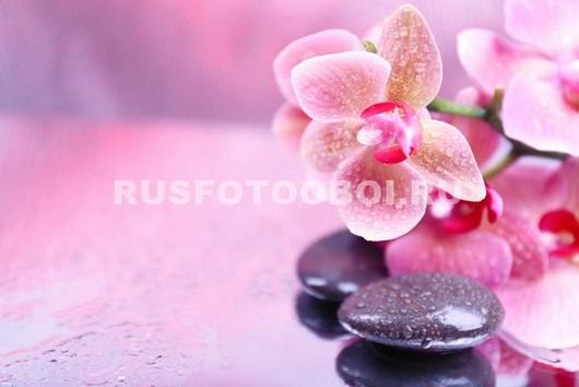 Камушки под орхидеями